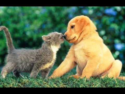 Guardianes del Amor  El Perro, El Gato y Yo.