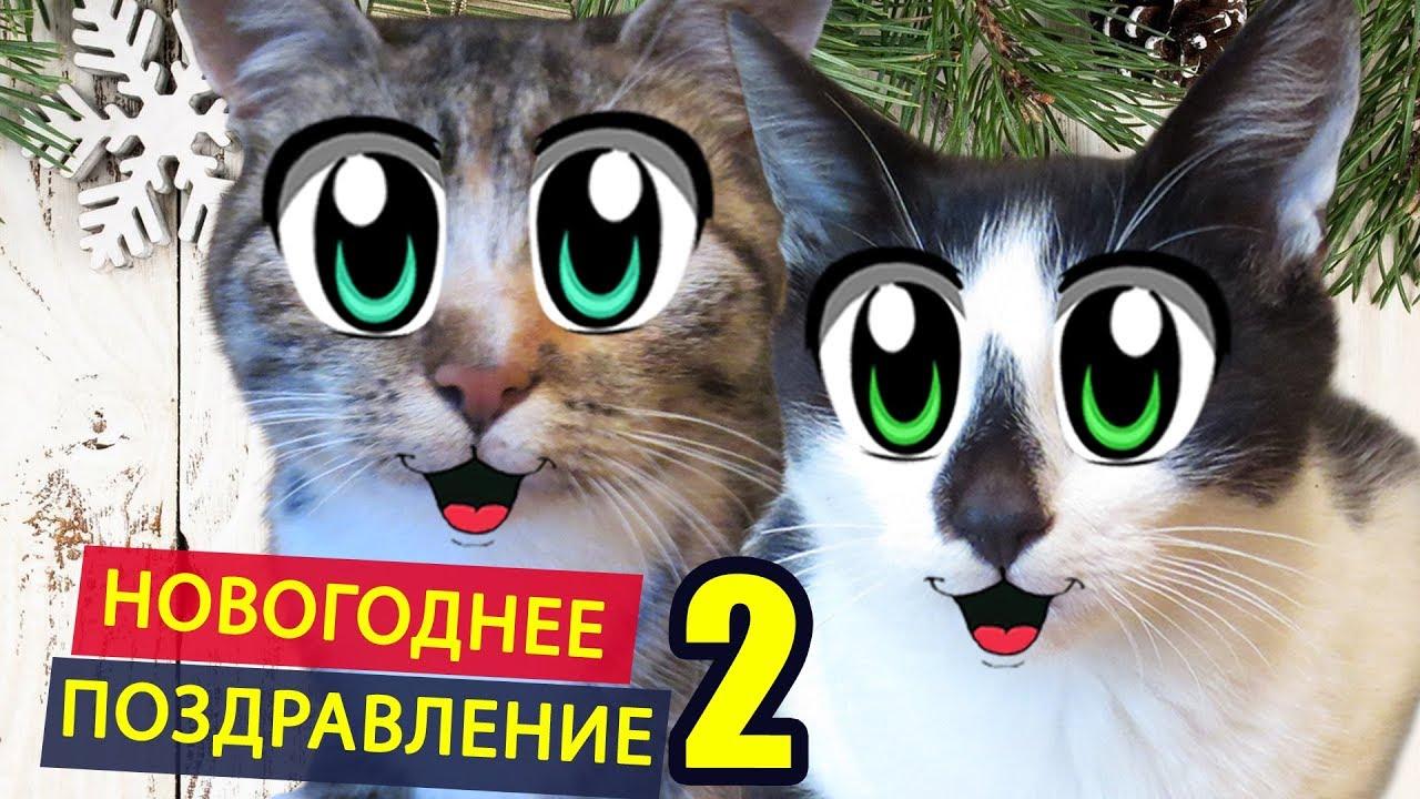 Za Suze Cats 2019 i Смешные Кошки o Смешные | смотреть видео ржачные приколы про котов