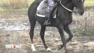 Лошади-полицейские в Ростове