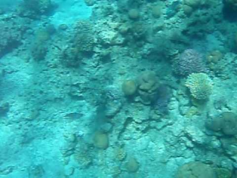 Sharm El Sheikh Coral Reef