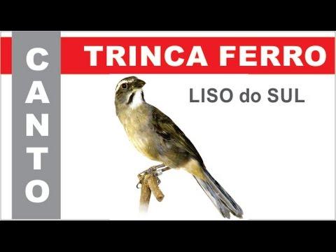 MP3 CANTO FERRO BAIXAR TRINCA PALCO DE