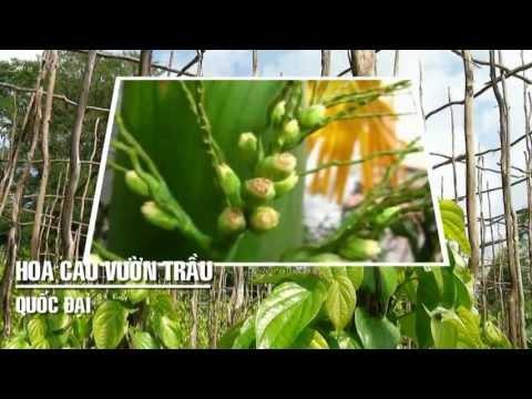 [ Karaoke ] Hoa Cau Vườn Trầu - Quốc Đại - http://newtitanvn.com