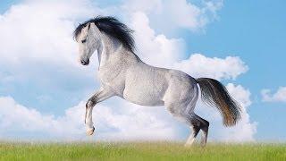 Как рисовать лошадь поэтапно. Рисованное видео.(http://myvideonazakaz.ru/moi-uslugi Как рисовать лошадь поэтапно. Рисованное видео. Здесь можно заказать рисованную презен..., 2014-06-12T16:34:34.000Z)