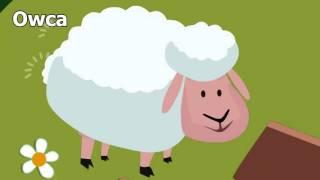 Odgłosy zwierząt domowych, farma, na wsi - dźwięki jakie wydają zwierzęta - nauka zabawa dla dzieci