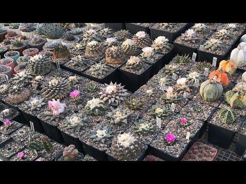 Какой должна быть идеальная коллекция растений