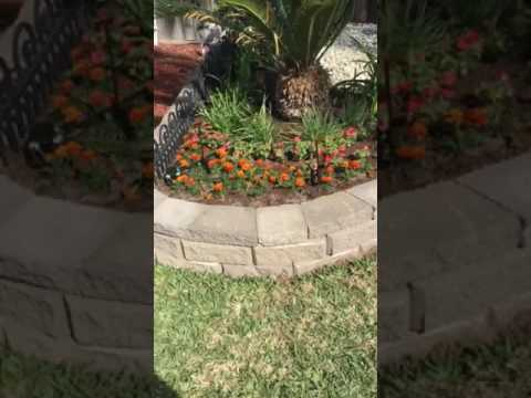 How to keep cats out of garden and flower beds YouTube