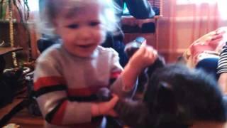 Приколы с котом!Тимон и Вика!Канал ДОЧКИ-МАТЕРИ.