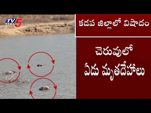 7 Dead Bodies Found In Vontimitta River   Kadapa Dist   TV5 News