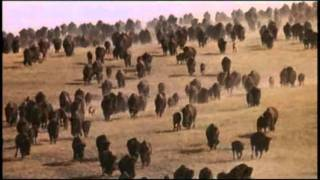 Sioux Tribes (Lakota and Dakota) | Bison Hunting | Native American | Video