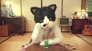 むぎ(猫) 『君に会いに』 【ミュージックビデオ・ショートバージョン&特典ダイジェスト】 thumbnail