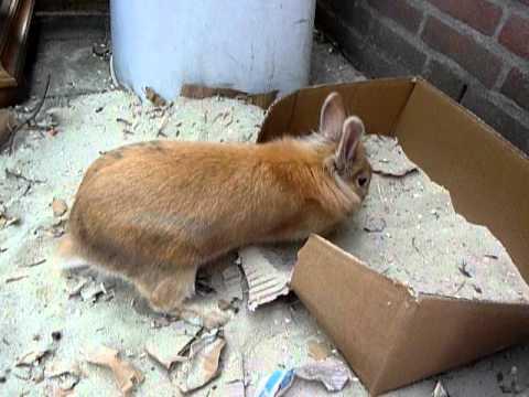 Mimi het gefrustreerde konijntje