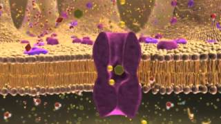 Repeat youtube video Biology 1, Lecture 7: Cellular Membranes