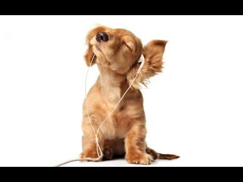 Natura Canina en la Radio: Mis Queridos Animales 97.7 Valencia