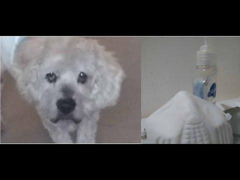 La Verdad Sobre El Coronavirus Canino