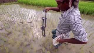 Less Fertilizer Equals More Rice, More Money in Bangladesh