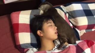 カワウソ劇場 それでも眠る強者(笑) thumbnail