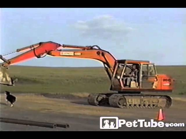 Walking a Dog with a TRACTOR- PetTube
