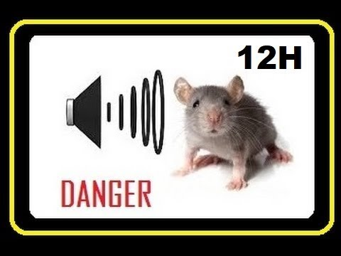 Sound to Drive Away RATS from Home