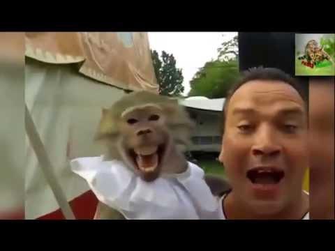 Смешные обезьяны смотреть онлайн бесплатно — хорошее