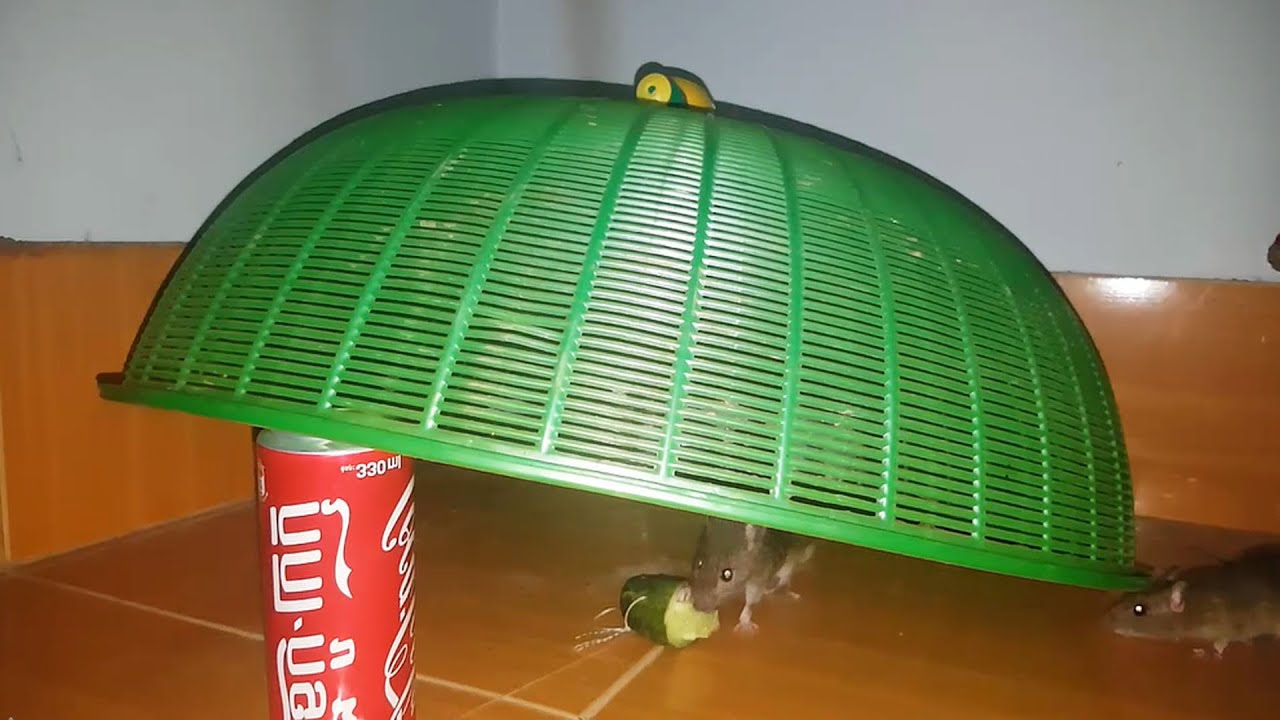 Best Simple Homemade Mouse/Rat Trap Using Cover Food And Coca Cola