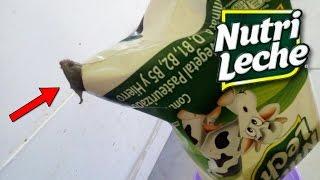►Los SECRETOS De NUTRILECHE | ¿NO Es Leche Realmente? thumbnail
