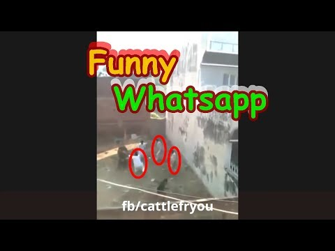 New funny clips 2017 Whatsapp funny videos collection (funny videos)