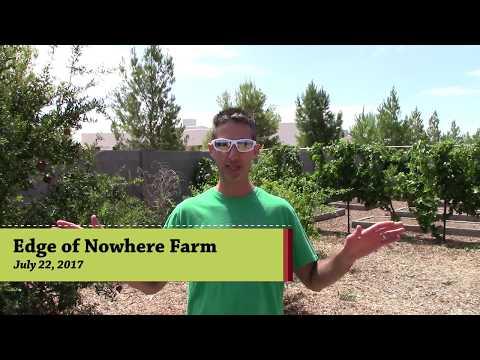 Farming in the Desert, Fruit Trees!