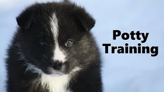 How To Potty Train A Karelian Bear Dog Puppy - House Training Karelian Bear Dog Puppies Fast & Easy