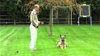 Guild Of Dog Trainers Uk - On Lead Dog Training Godt  Part 1