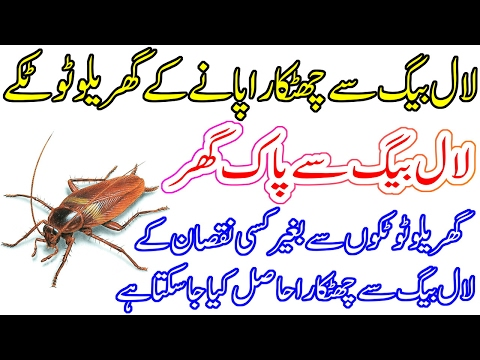 Lal Bagh (Cockroach) Bhagane ke Gharelu Tarike - Home Remedies To Get Rid of Cockroach