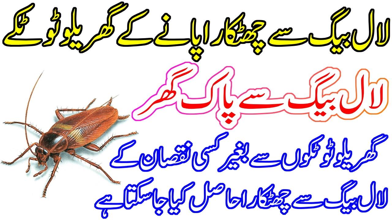 Lal Bagh (Cockroach) Bhagane ke Gharelu Tarike - Home Remedies To ...