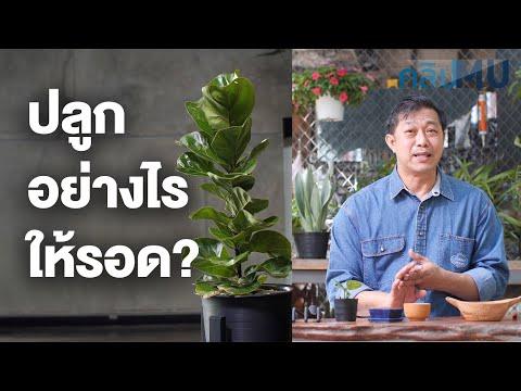 6 เคล็ด(ไม่)ลับ ปลูกต้นไม้ในอาคารอย่างไรให้รอด | คลิป MU [Mahidol Channel]