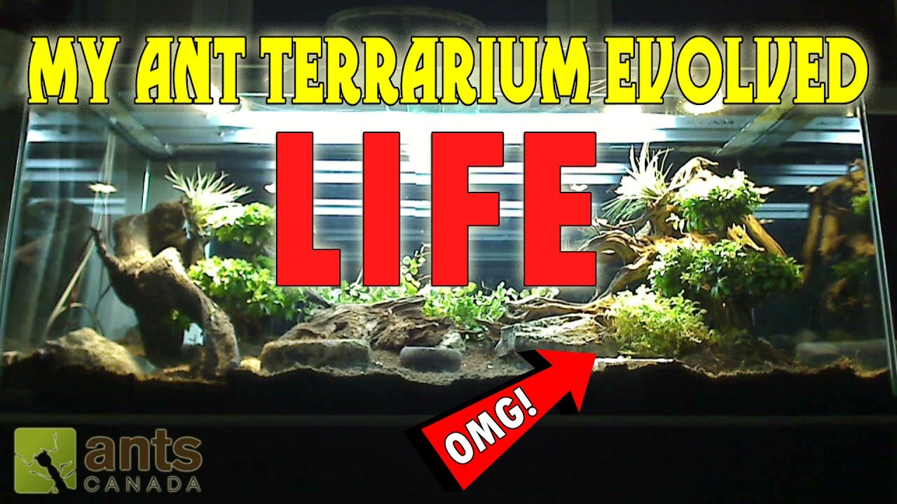omg-my-giant-ant-terrarium-evolved-life