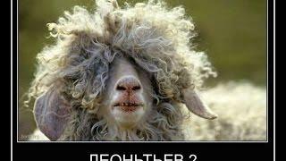 Прикольные демотиваторы про животных 2014