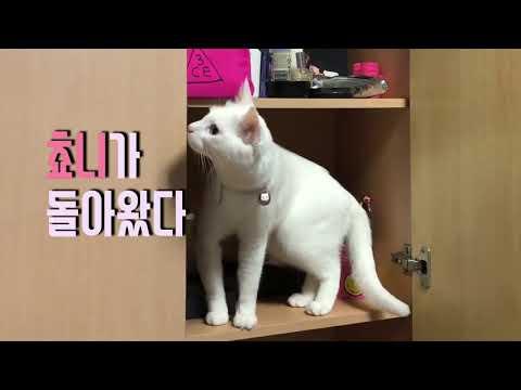 [콤콤이네] 고양이 합사는 어려워요.....(cats hissing)