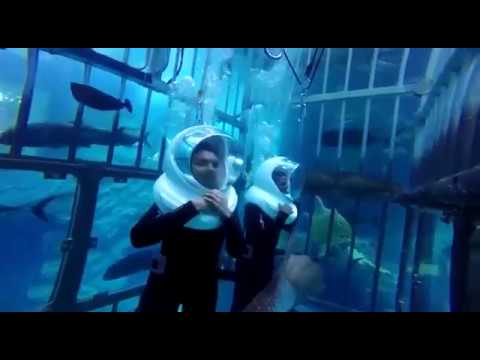 Dubai aquarium and underwater zoo | shark encounter