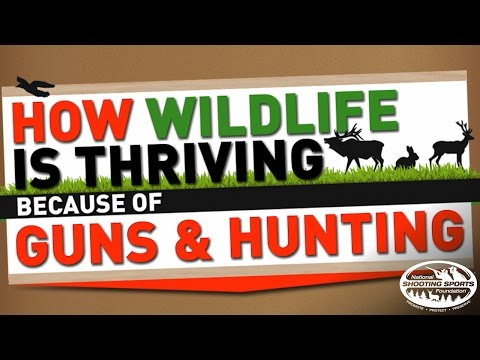 How Wildlife Is Thriving Because of Guns and Hunting