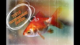 ТОП 5 популярных аквариумных рыбок. Золотая рыбка. Скалярия. Барбус. Гуппи. Данио.