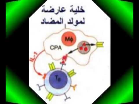 مخطط المناعة مع الشرح لبكالوريا علوم تجريبية