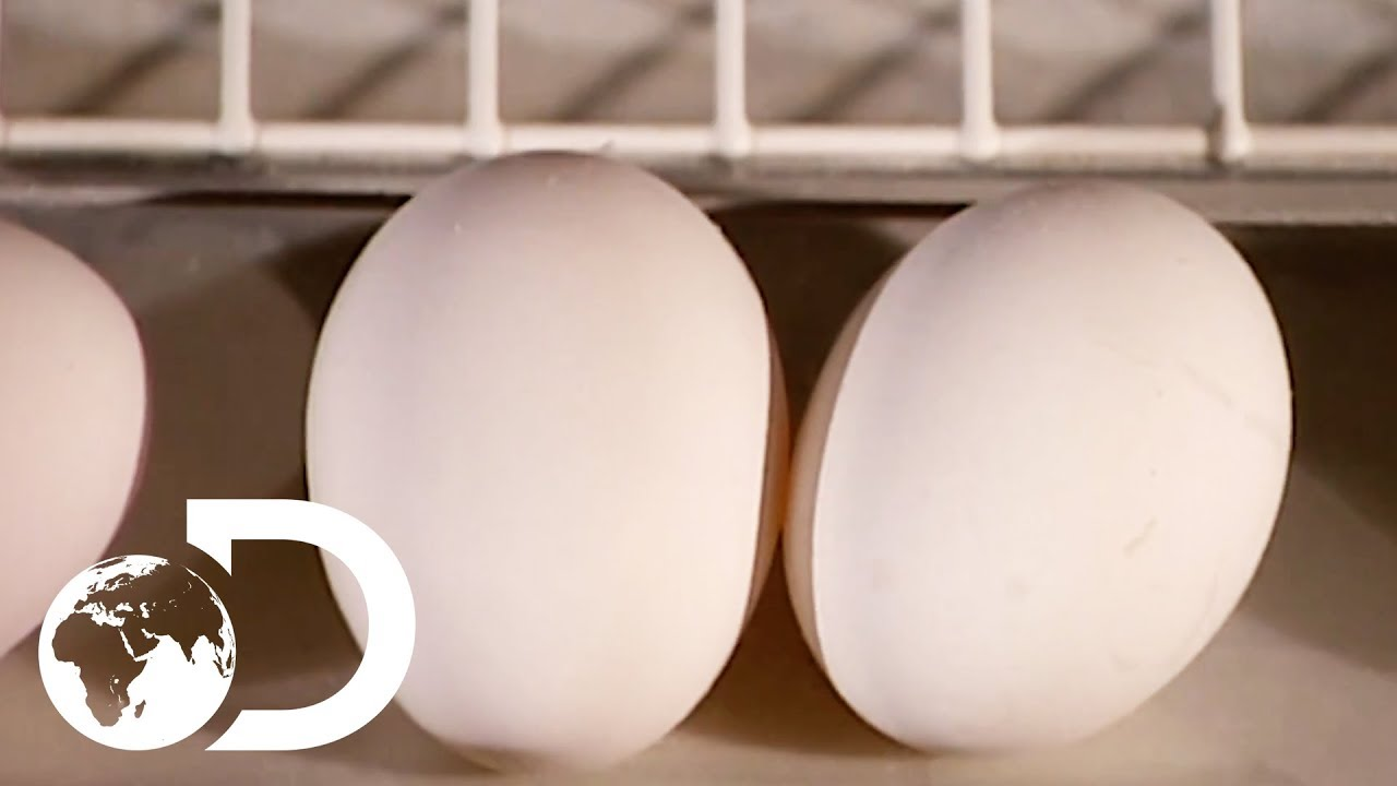 Download EGGS   How It's Made