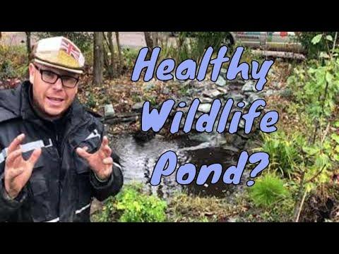 How Do I Keep My Wildlife Pond Healthy