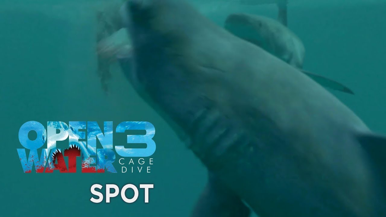 Open water 3 cage dive spot 15 youtube - Open water 3 cage dive ...