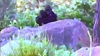 Baby bigfoot? CONVINCING BREAKDOWN! | Serious Video Evidence