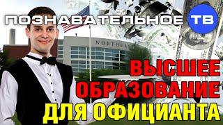 Высшее образование для официанта (Познавательное ТВ, Виктория Бутенко)