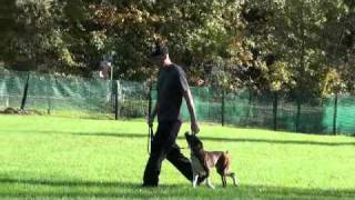 Mack (boxer) - Obedience Level I. Dog Training