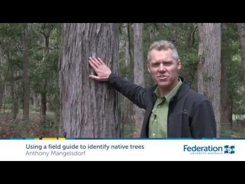 Using A Field Guide To Identify Native Trees