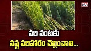 Adivasi Farmers Demand Compensation for Crop Loss in Venkatapuram | Mulugu District | CVR News