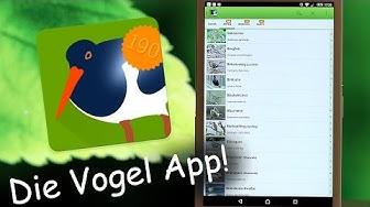 Vogelarten ganz leicht bestimmen  - Die Vogel App ! -