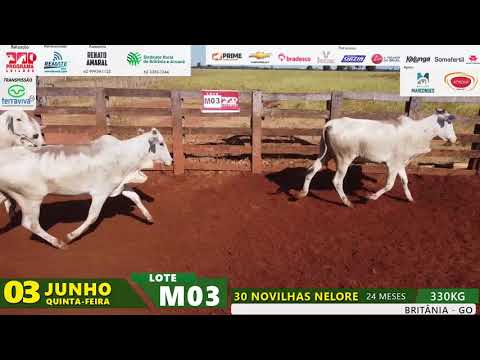 LOTE M03