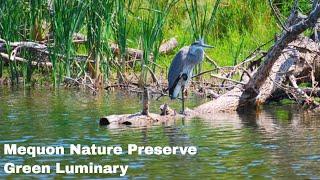 Mequon Nature Preserve Luminary